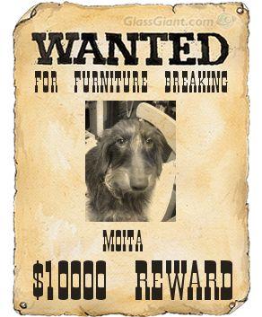 Wantedpostermoita3
